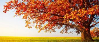 Erholsame Herbstferien ...
